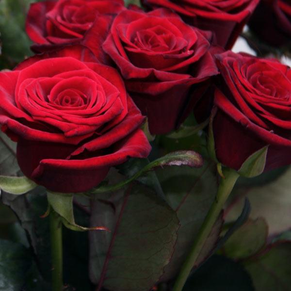фото розы гран-при